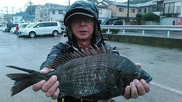 クロダイ長井かかり釣り2015年11月8日