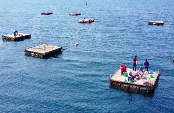 クロダイの長井かかり釣りセンター