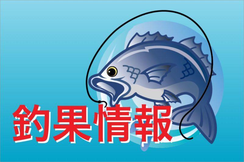 長井かかり釣りセンター釣果情報